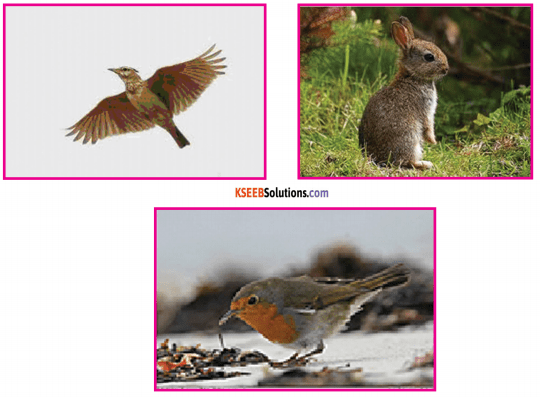 KSEEB Solutions for Class 6 English Poem Chapter 3 Kindness to Animals 4