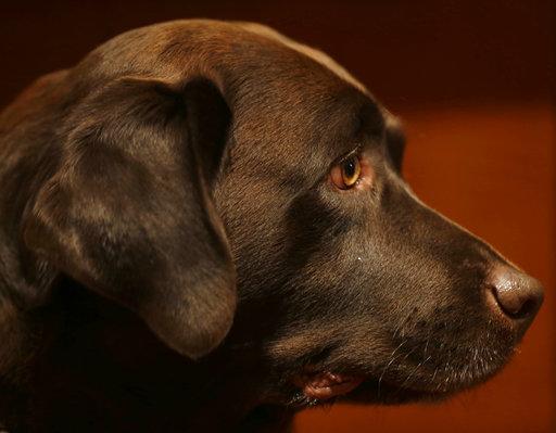Dog Breeds_362116