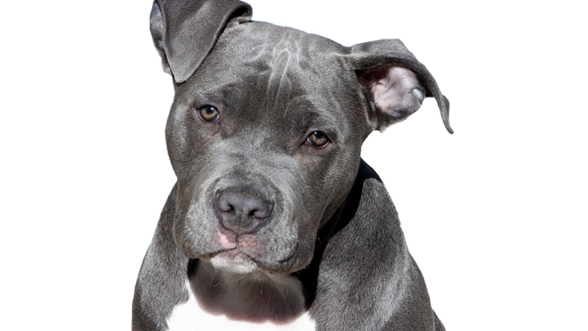 Wyandotte County repeals pit bull ban