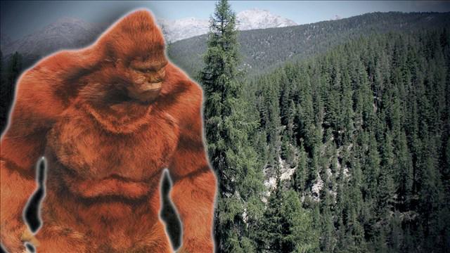 Bigfoot_163277