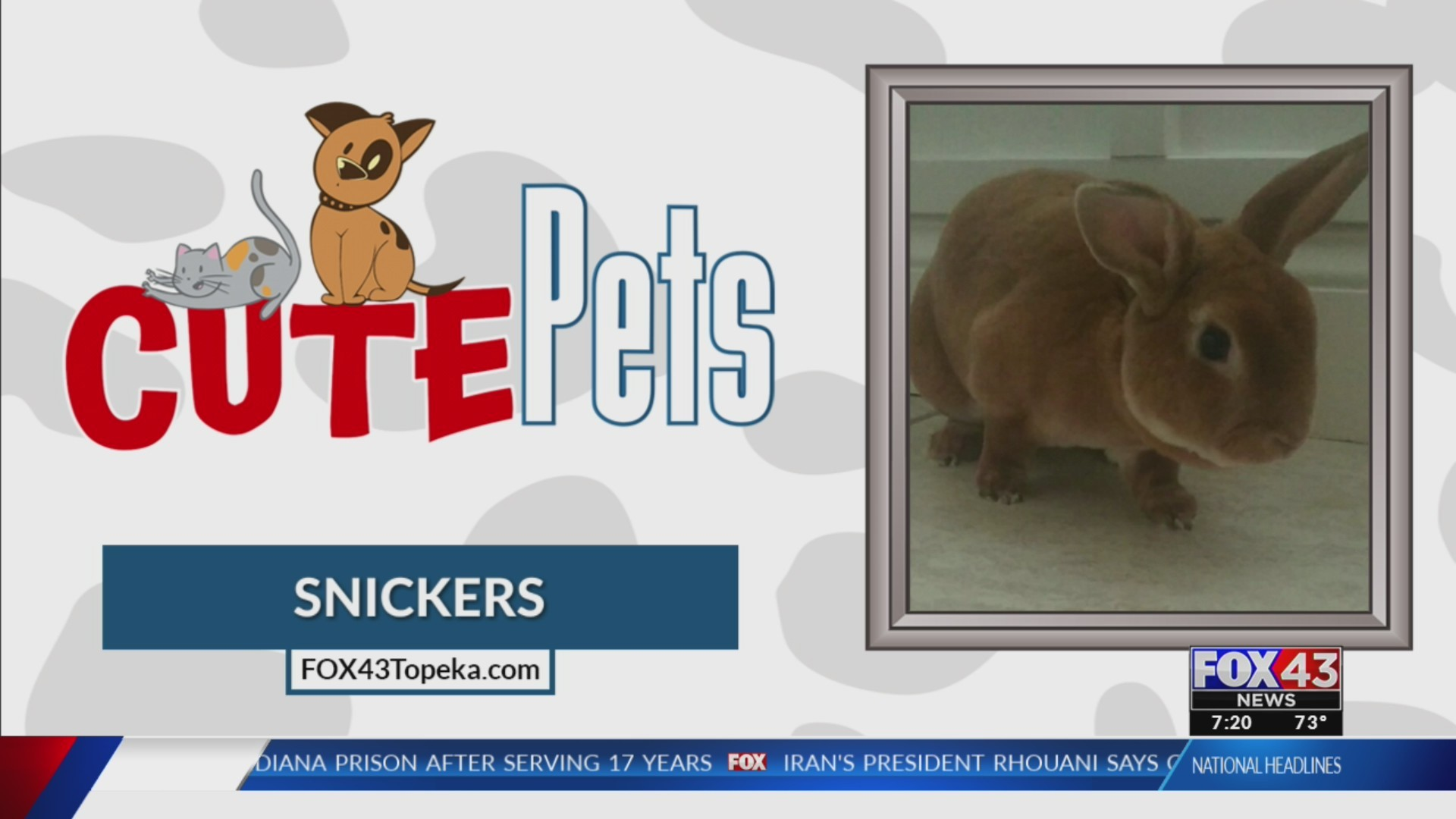 Cute Pets: Snickers (05/24/19)