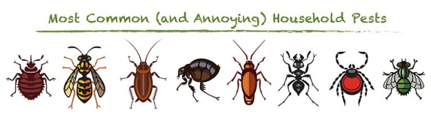 Bed Bugs A Serious Threat The Kth International Student Blog