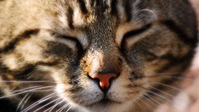 Cat face, tabby_2696315617460741-159532