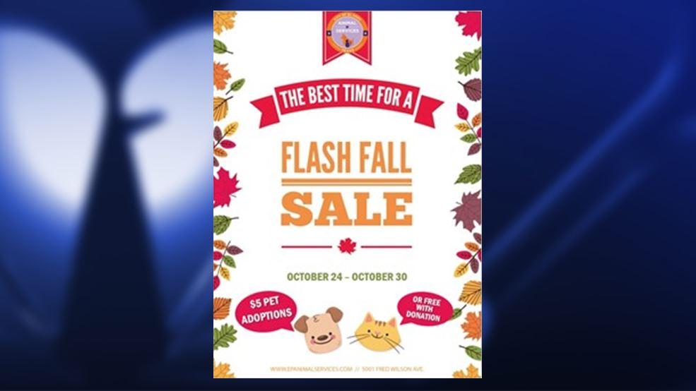 fall flash sale_1508885741901.jpg