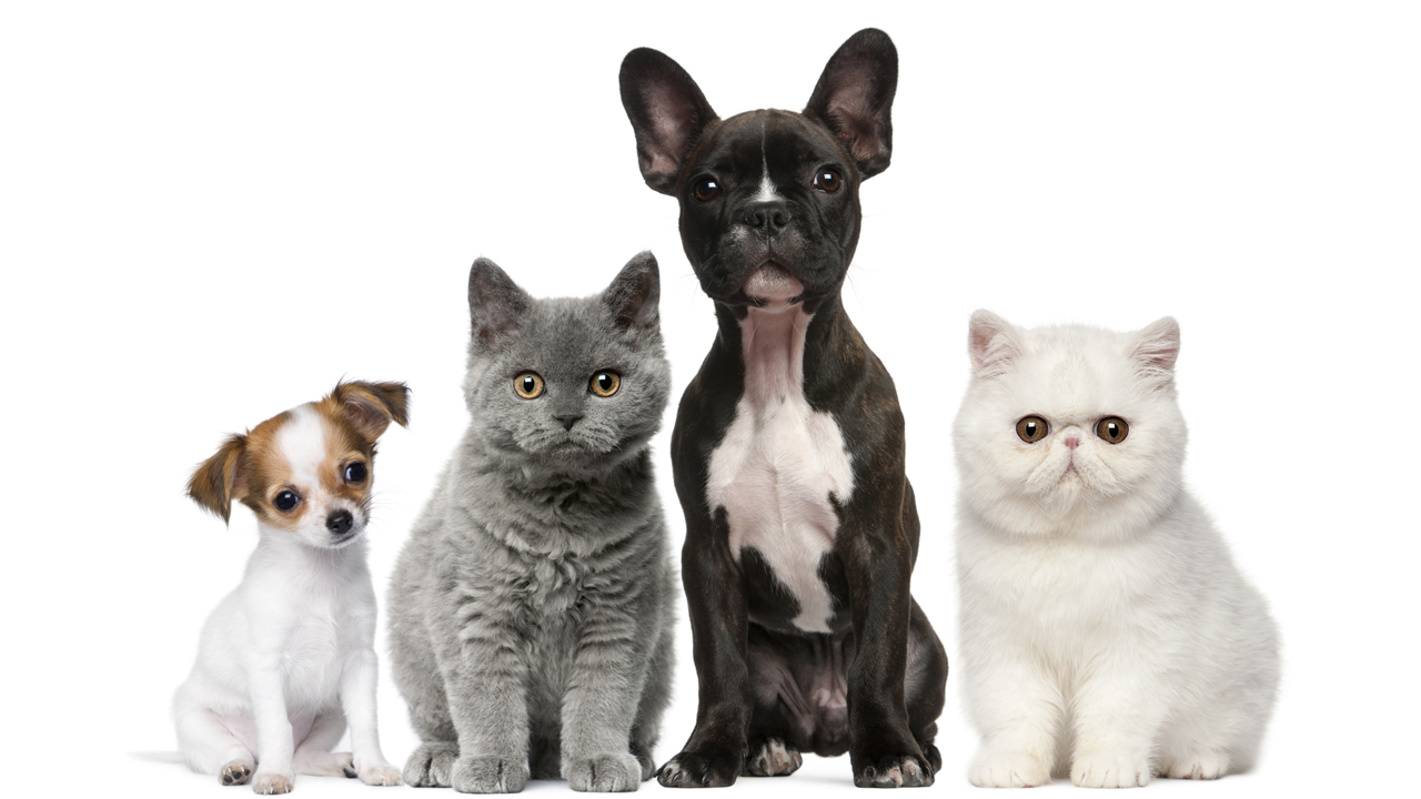 healthy-pets-animals-cat-dog_1516641391014_335760_ver1_20180123051001-159532