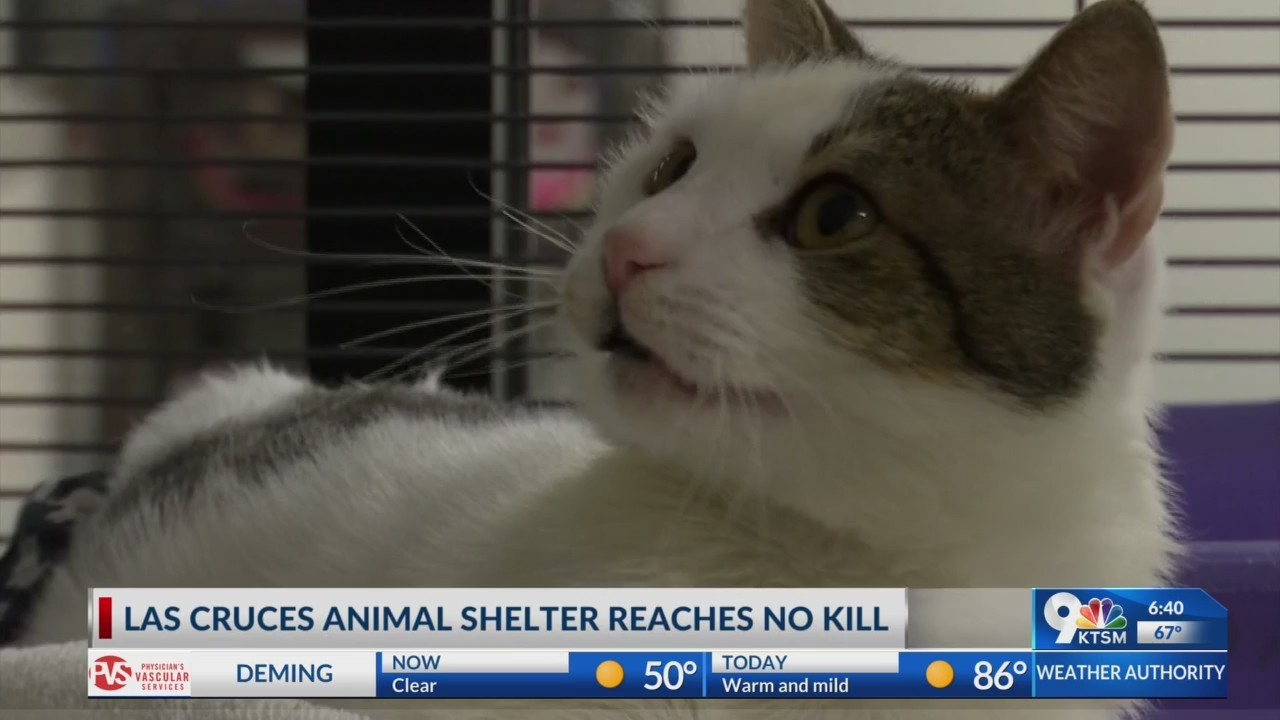 "Animal Service Center of the Mesilla Valley becomes ""no kill"" shelter"