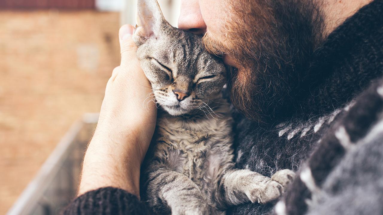 cats-pets-animals_1532380657762_388567_ver1_20180731055401-159532