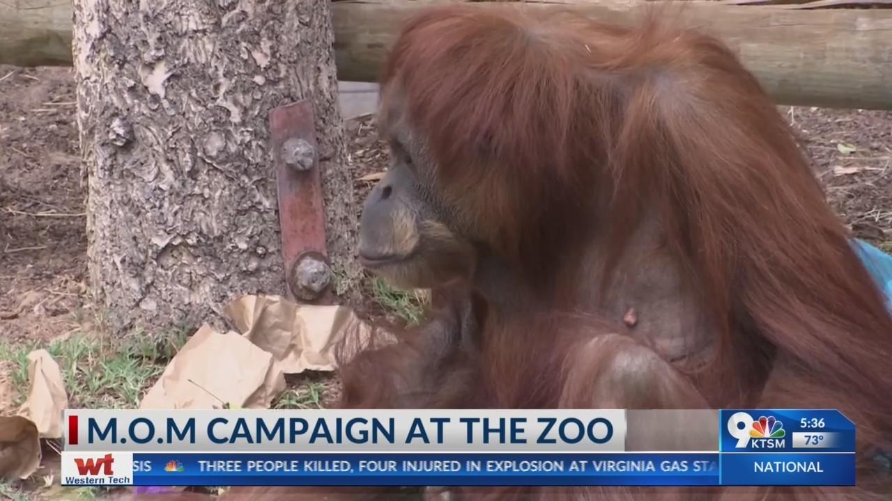 M.O.M. event at El Paso Zoo brings orangutan awareness