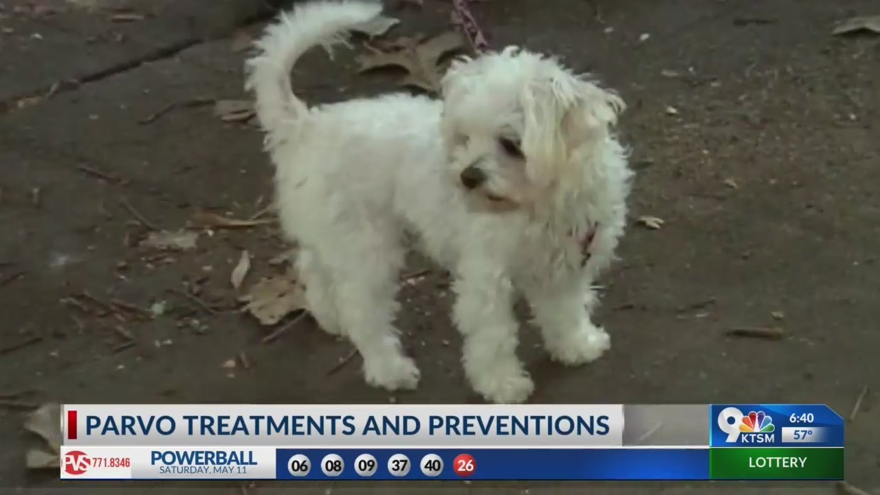 Parvo Virus in dogs has become an epidemic in El Paso during spring months