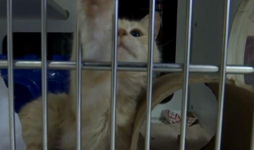 cats_1558666045264.JPG