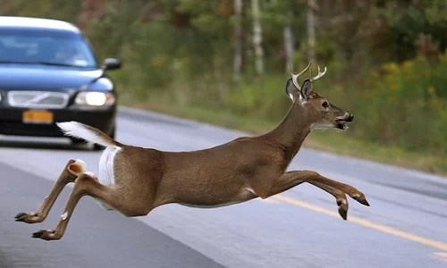 Princeton woman hurt when car strikes deer in roadway