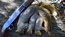 Squirrels next to gun