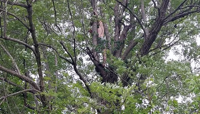 Man flees courtroom, leads officers on pursuit, takes refuge in tree