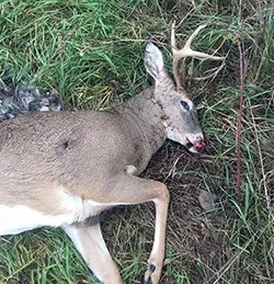 Deer shot illegally in north Missouri