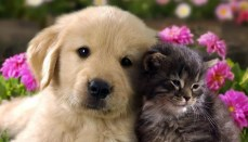 Dog and Cat (Pet License Photo)