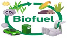 Biofuel Graphic