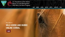 Bureau of Land Management online Corral Final