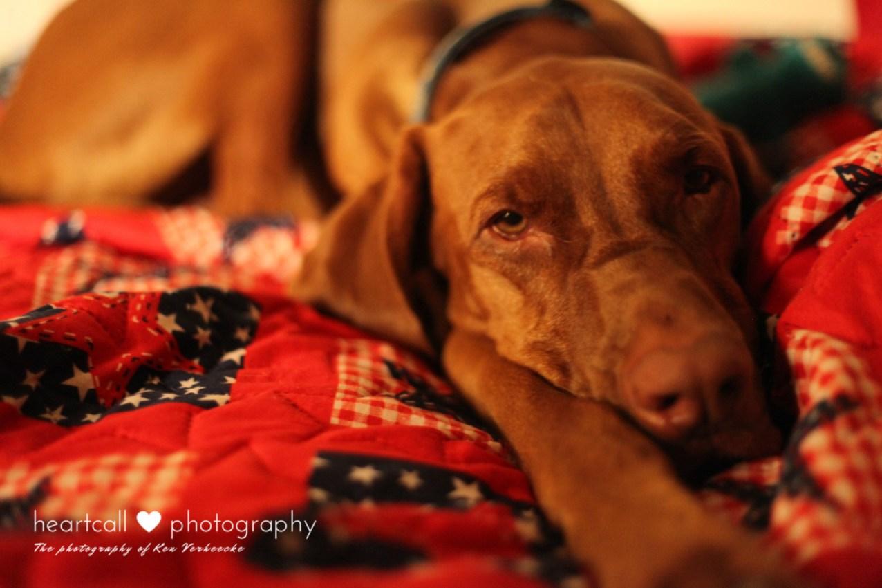 bedtimemoosesmall