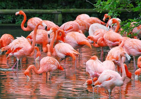 Flamingo village
