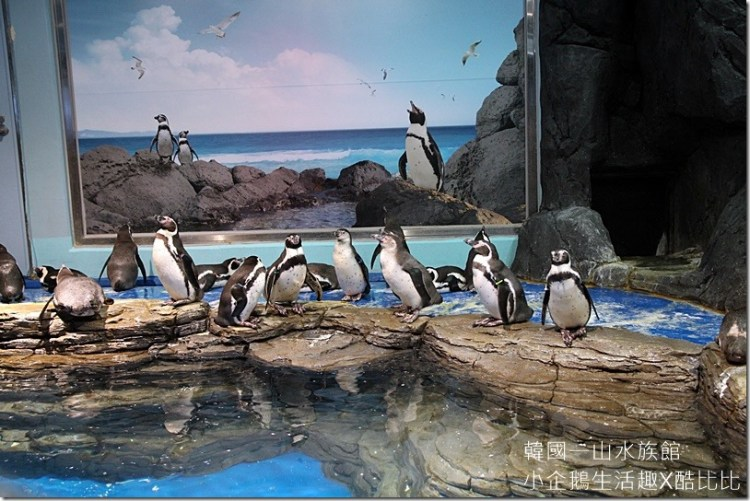 韓國景點|充滿歡樂與驚喜 首爾最大AQUA PLANET一山海之星水族館