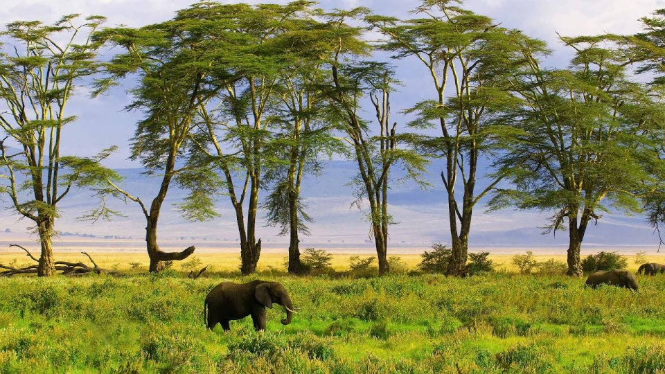 hd-african-elephants-wallpapers-with-elephants-in-the
