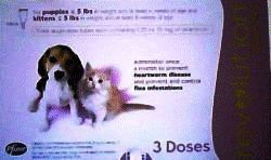 revolution for puppies and kittens instructions