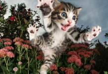 Emosi kucing terkenal susah diuraikan. Apakah kamu yakin, kamu sudah benar-benar mengenal kucingmu dengan baik ?.