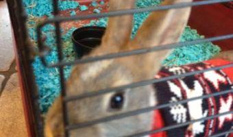 Kuddly Employee's First Pet: Joy