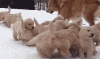 Puppies Everywhere