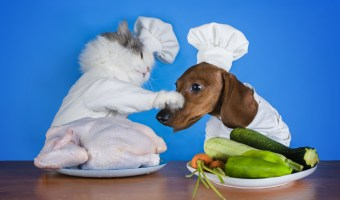 4 Holiday Foods to Avoid Feeding Your Pets