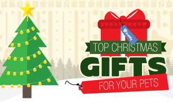 Top Christmas Gifts For Your Pets