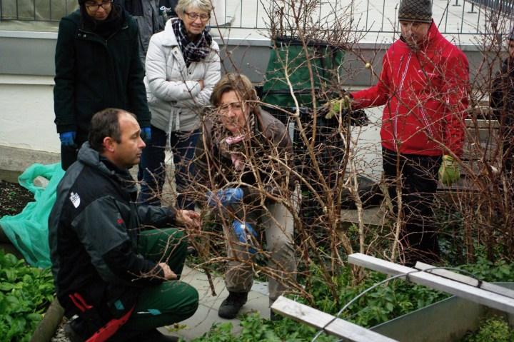 Kurs: Gartengehölz richtig schneiden November 2017