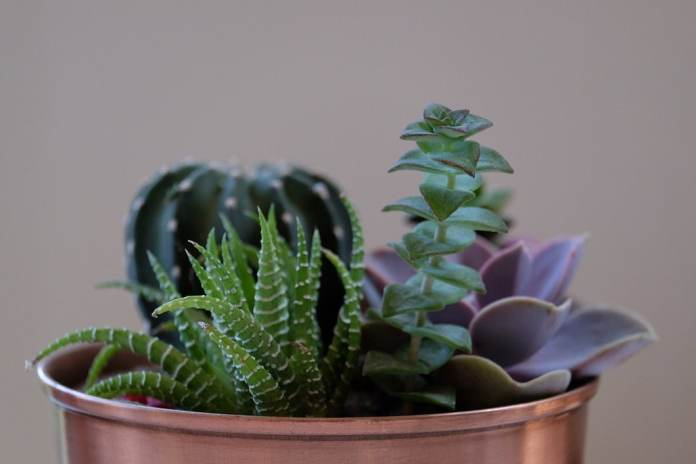 Succulents are extremely frugal and easy-care plants. Oh yes: due to their biodiversity, they also look particularly interesting and beautiful. (Photo: Jason Zook)