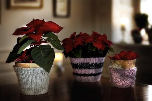 julestjerne1