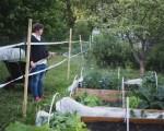 Helppo kasvimaa – kasvikset omasta maasta