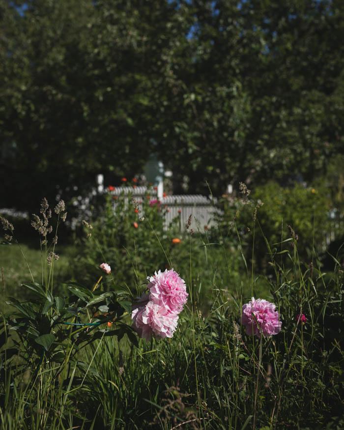 Rönsyilevä puutarha | puutarhan hoito | kukkapuutarha | hyötypuutarha | kanala | kana