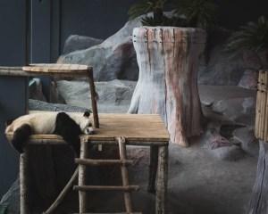 Ähtärin eläintarha ja Hotelli Mesikämmen