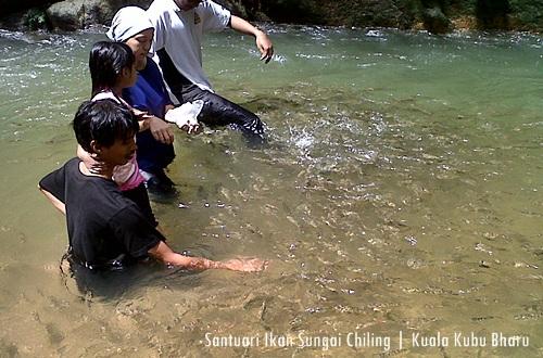 Santuari Ikan Sungai Chiling - Boleh mandi dan berenang dengan dikelilingi ribuan ikan kelah