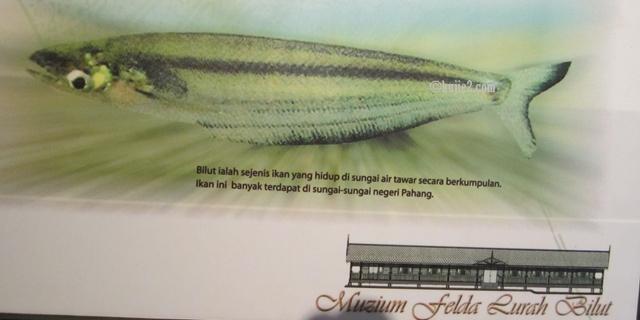ikan bilut