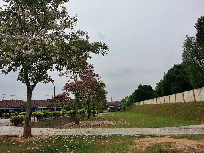 musim bunga sakura di malaysia