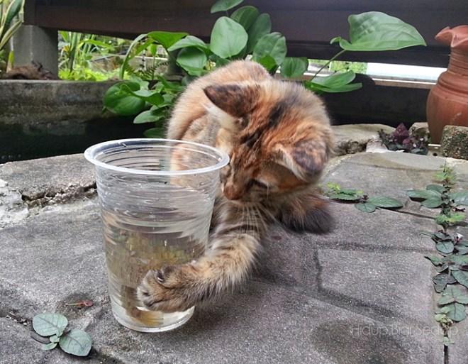 kucing tangkap ikan