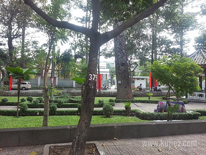 pokok vietnam