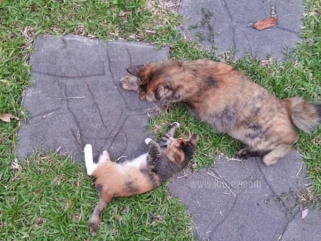 kucing main di taman