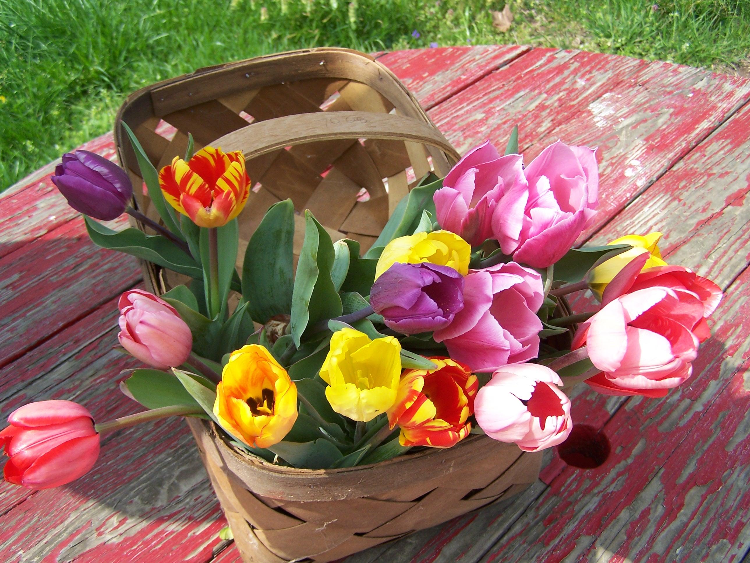 Kukyflor Cuatro Razones Para Decorar Con Tulipanes 3,163 likes · 1,043 talking about this. cuatro razones para decorar con tulipanes