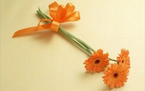 gerberas-naranja-regalo-moño-cinta