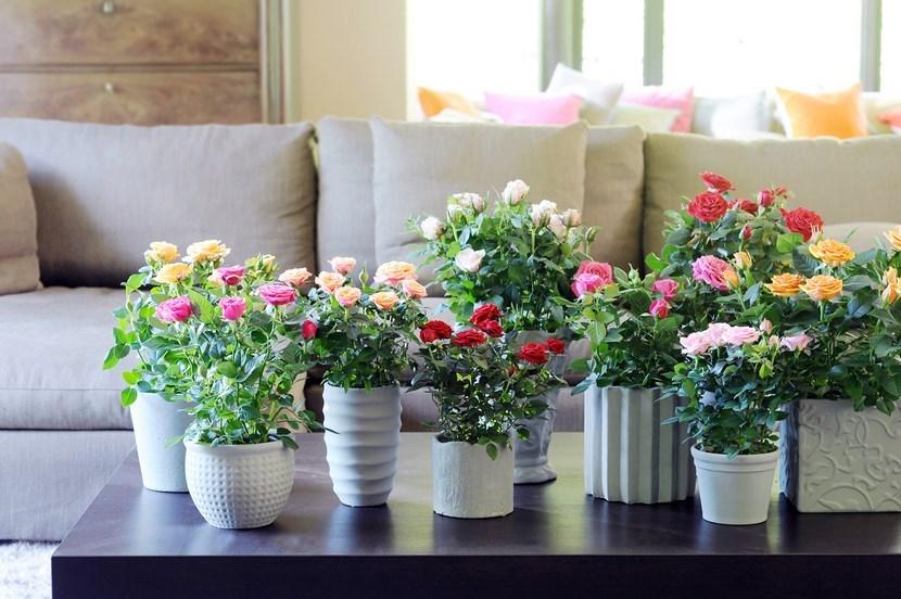 Kukyflor| Las tres flores más fáciles de cuidar
