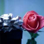 regalo-de-cumpleanos-flor-rosa-moño