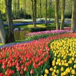 Jardines-Keukenhof-Paises-Bajos-Holanda