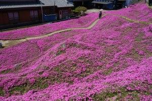 Jardín de flores rosadas