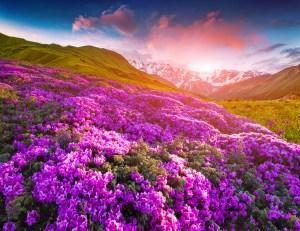 amanecer con flores